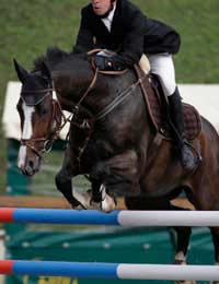 Equestrianism Olympic Sport Athletes